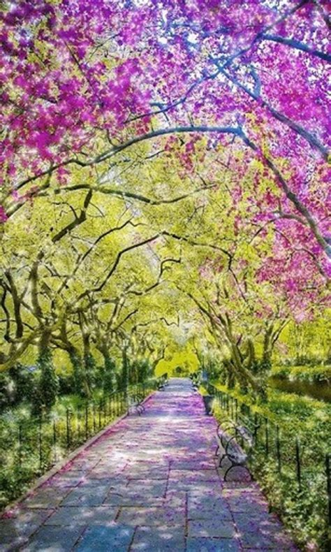 wallpaper android path download spring path live wallpaper for android by hunley