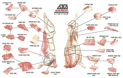 beef parts diagram beef charts and diagrams rib eye cut diagrams elsavadorla