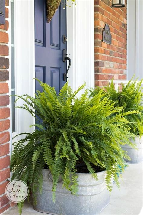 Container Plant Ideas Front Door by 25 Best Front Porch Plants Ideas On Fuller S