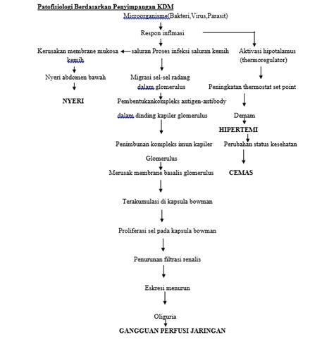 patofisiologi glomerulonefritis blog kesehatan