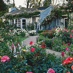 country cottages cottage garden plants and