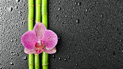 wallpaper bunga full hd bunga kertas dinding hd