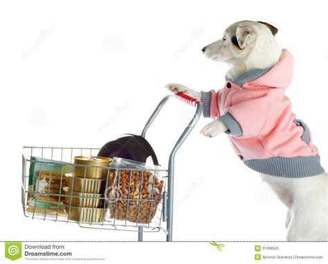 puppy shopping pushing a shopping cart of food royalty free stock photo image 37498325