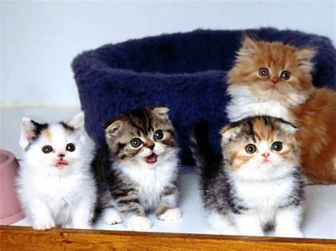 cerco casa in regalo cerco gattini in regalo petpassion
