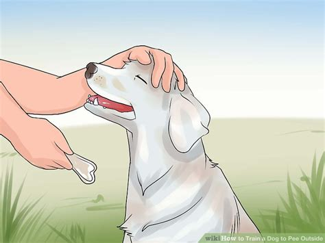 how to train dog to use bathroom outside