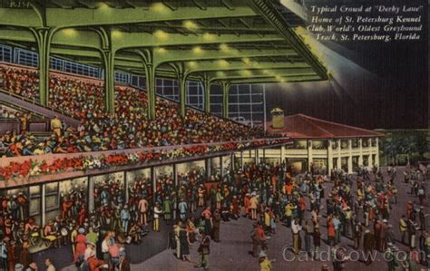 track st pete typical crowd at quot derby quot world s oldest greyhound track st petersburg fl