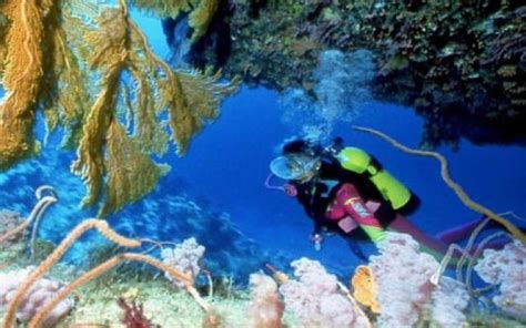 scuba diving   water kingdom   top