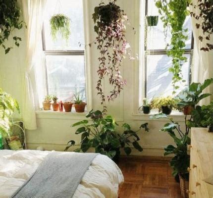 piante per da letto piante in da letto ecco quali