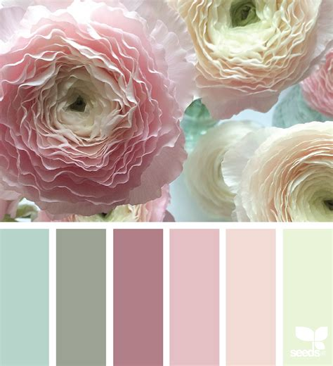 design seeds instagram ranunculus hues design seeds