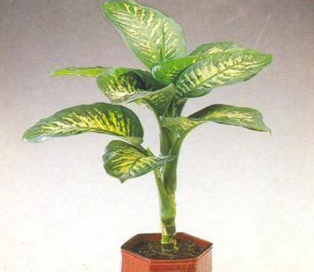 cuidado plantas interior plantas de interior plantas de sombra o de interior