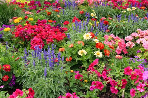 Pictures Of Garden Flowers Benefits Of Starting Your Own Garden Perfume Genius