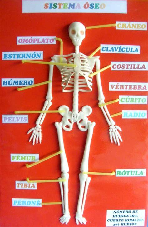 como hacer una maqueta del esqueleto humano 191 c 243 mo hacer una maqueta del esqueleto humano esqueleto