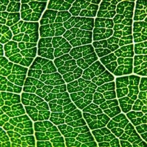 nature pattern pinterest fractals in nature pattern pinterest