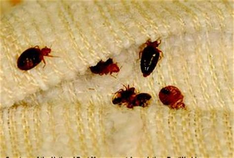 can bed bugs come from outside do you think bed bugs can infest your car paperblog