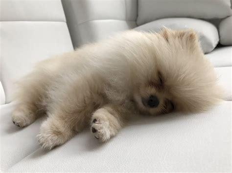 rclbeauty101 puppy neyo neyobambi