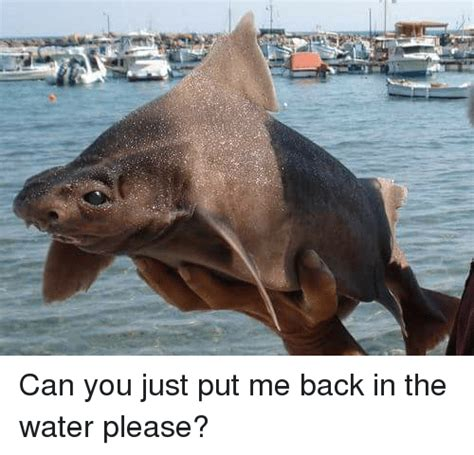 can you just put me back in the water please water meme