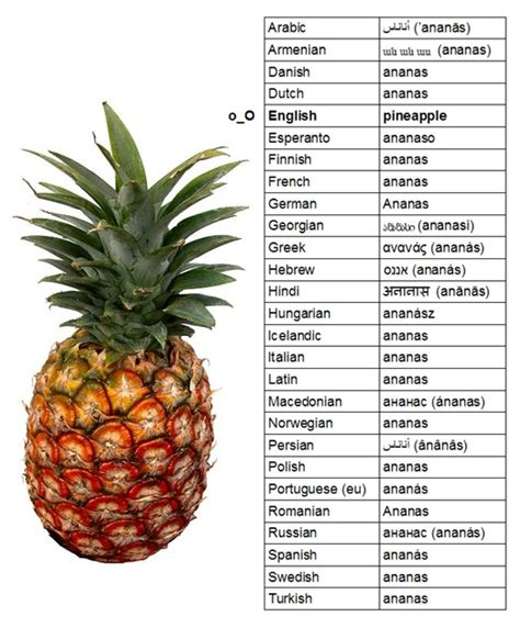 Ananas Pineapple Meme - the word pineapple in different languages buzzhunt co uk