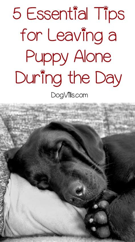 going it alone essential tips for the independent consultant books leaving a puppy alone during the day 5 essential tips