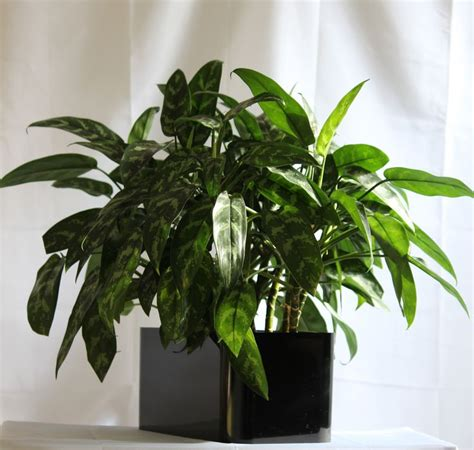 120 best images about house plants care on pinterest