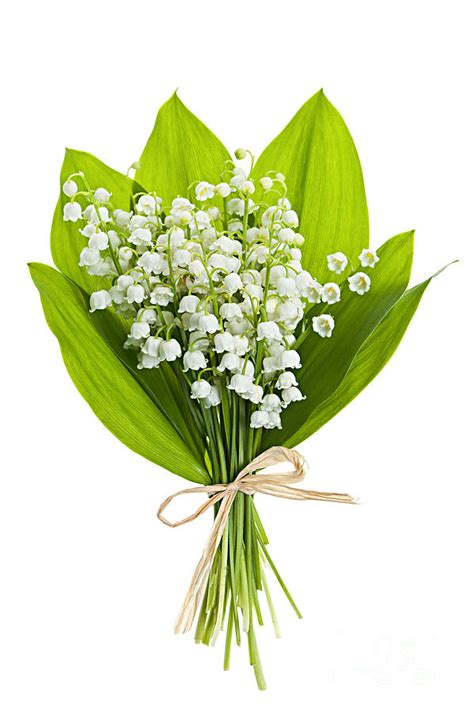 Where To Buy Home Decor Online by Lily Of The Valley Bouquet Photograph By Elena Elisseeva
