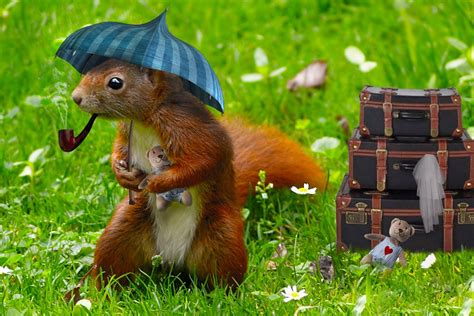 free photo squirrel child decoration room free image