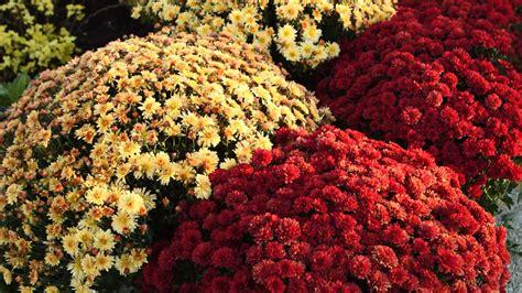 fall plants    organically grown wines natura