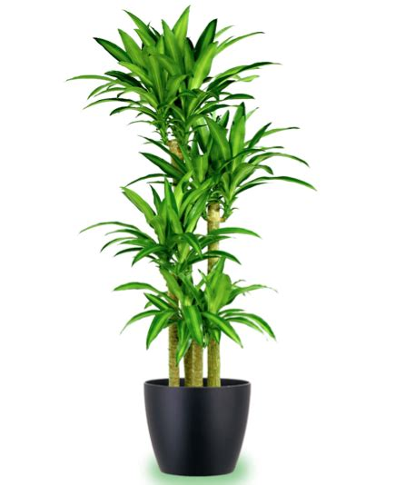 png house plants png gif base
