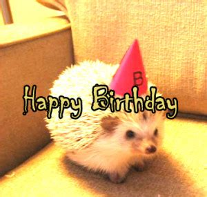 Cute Birthday Meme - happy birthday meme cute special collection