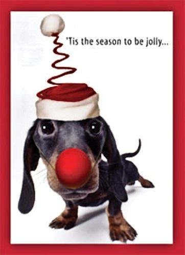 long  short     dachshund dog news magazine dachshund christmas cards