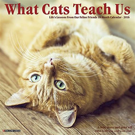 what cats teach us 1682346927 2016 what cats teach us wall calendar import it all