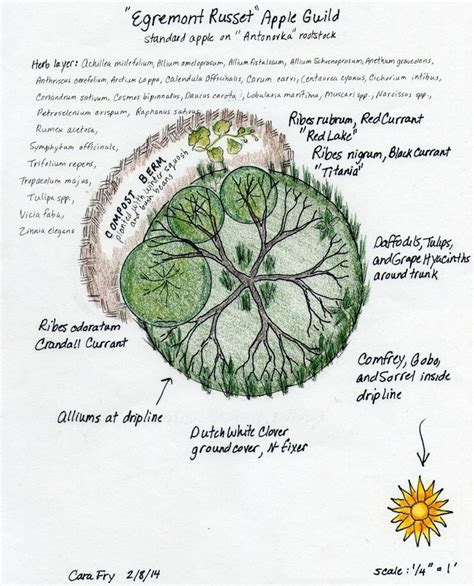 permaculture guilds fruit trees 92 best images about fruit tree guild on trees