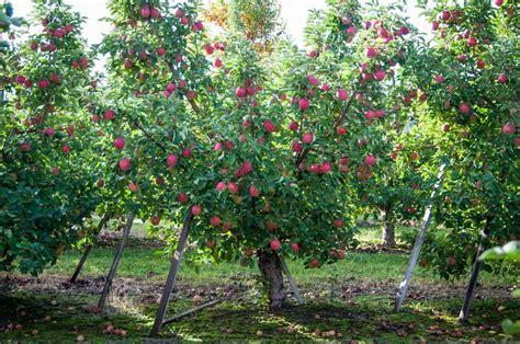 orchard washington washington apple commission