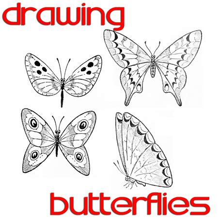 How To Draw Butterfly Butterfly Drawing Easy Methods How To Draw Butterflies