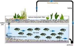 aquaponic system design aquaponics diy specs price release date redesign