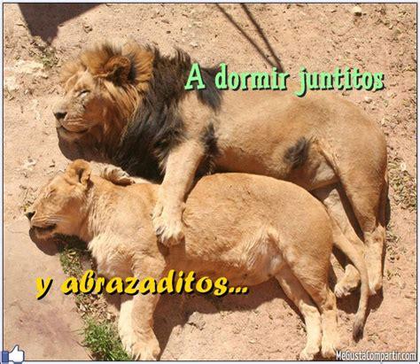 imágenes de leones juntos 60 imagenes de abrazos con frases para compartir amor y