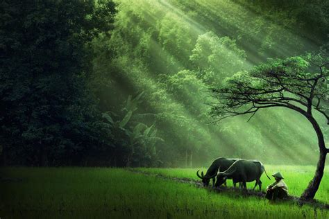 wallpaper desktop alam dalam kedamaian sang alam by ipoenk graphic digital