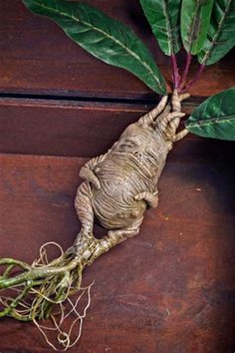 1000 images about mandrake root dolls on pinterest roots dolls and wiccan spells
