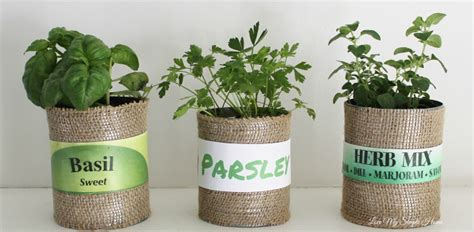 decorate  herb plants love  simple home
