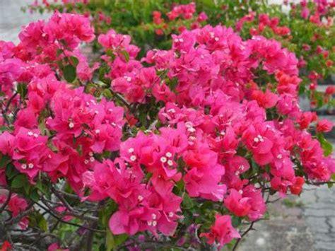 tanaman hias  mudah dirawat  halaman rumah coba