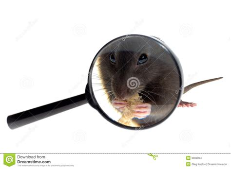 mouse for glass mouse in magnifying glass stock images image 3560094