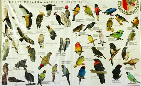the species list part 2 audubon