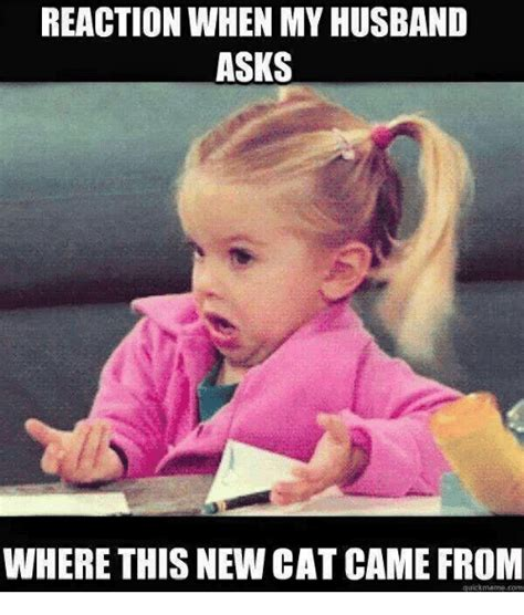 Internet Wife Meme - reaction when my husband asks where this new cat came from