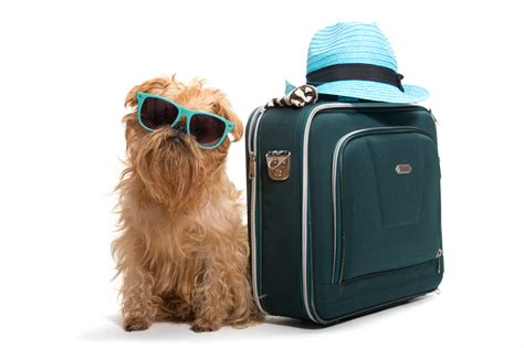 traveling with puppy 5 pet friendly travel tips for the 4th of july los angeles travel magazine