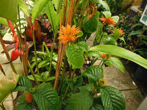 tropical plants florida this week s hours 5 15 5 18 2013 exotica tropicals