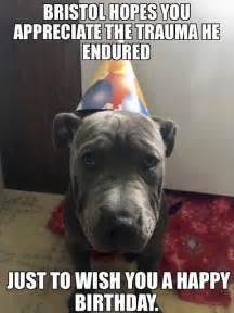 Pitbull Puppy Meme - randomocity x tra memes puppy memes sharpei mix