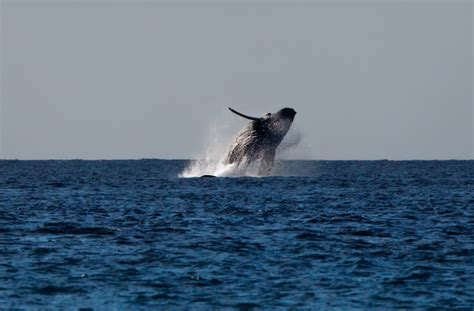 Whale Overall whales are here in
