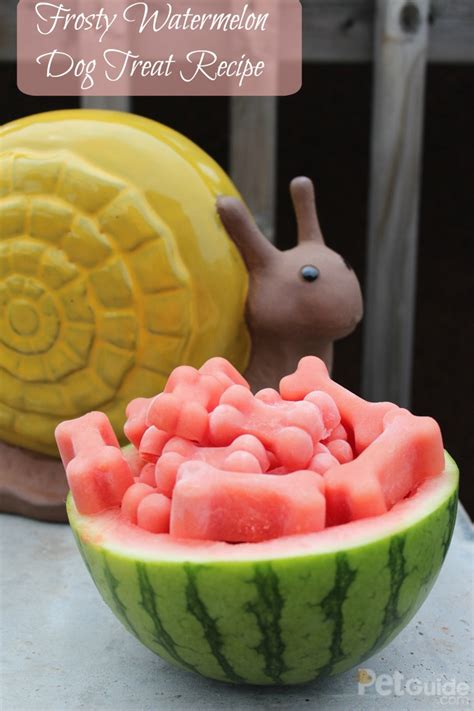 dogs and watermelon frosty watermelon treat recipe