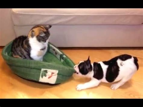 cats stealing beds cats stealing beds with cats