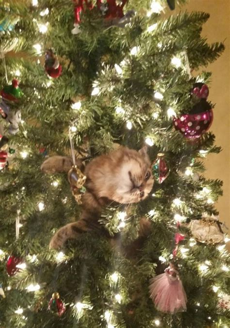 10 cats helping decorate christmas trees