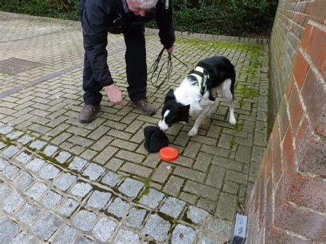 dog scenting in house ground scenting berkshire search rescue dogs to search locate reunite providing